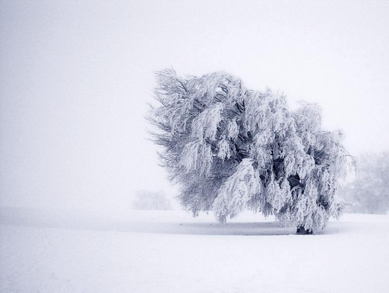 ..::Schnee-Baum::..