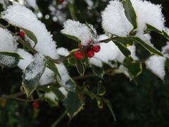 Schnee bei minus 10 Grad