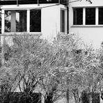 Schnee bestäubte Bäume und gute  Architektur ......