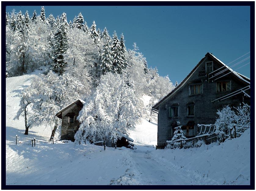 Schnee bis in die Niederungen (1)