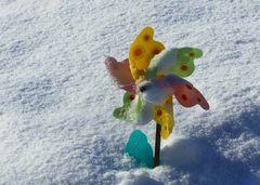 Schnee-Blümchen