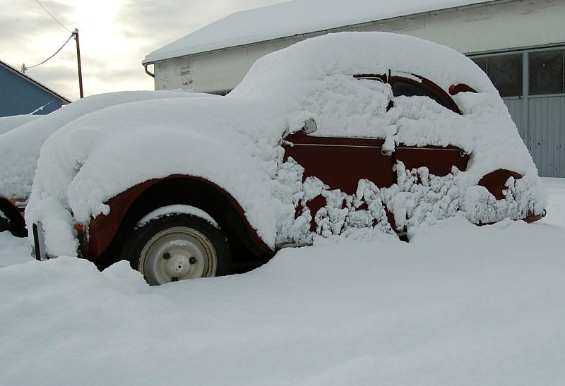 Schnee-Ente