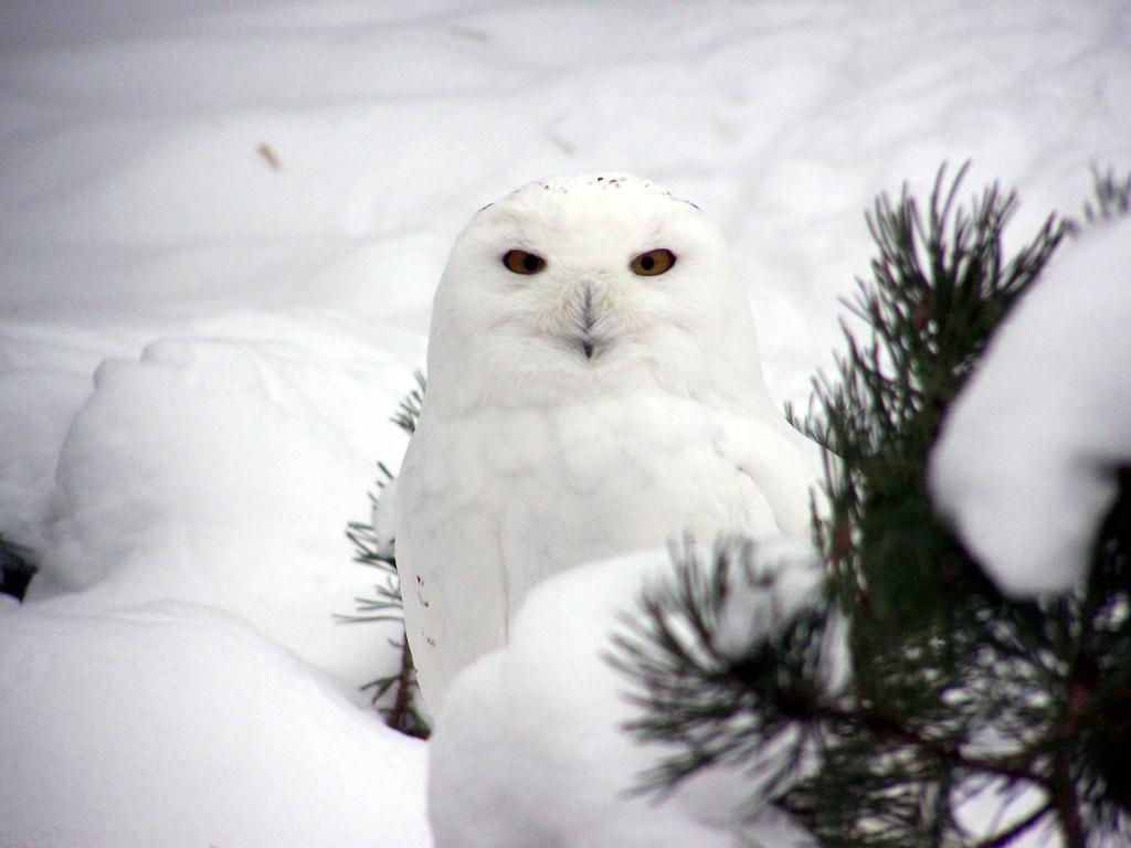 Schnee-Eulen-Schneemann