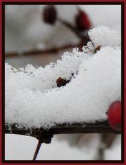 Schnee ganz nah....