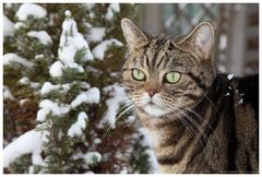 Schnee-Hase...neee Kater