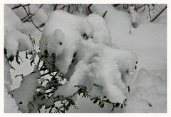 Schnee-Hörnchen