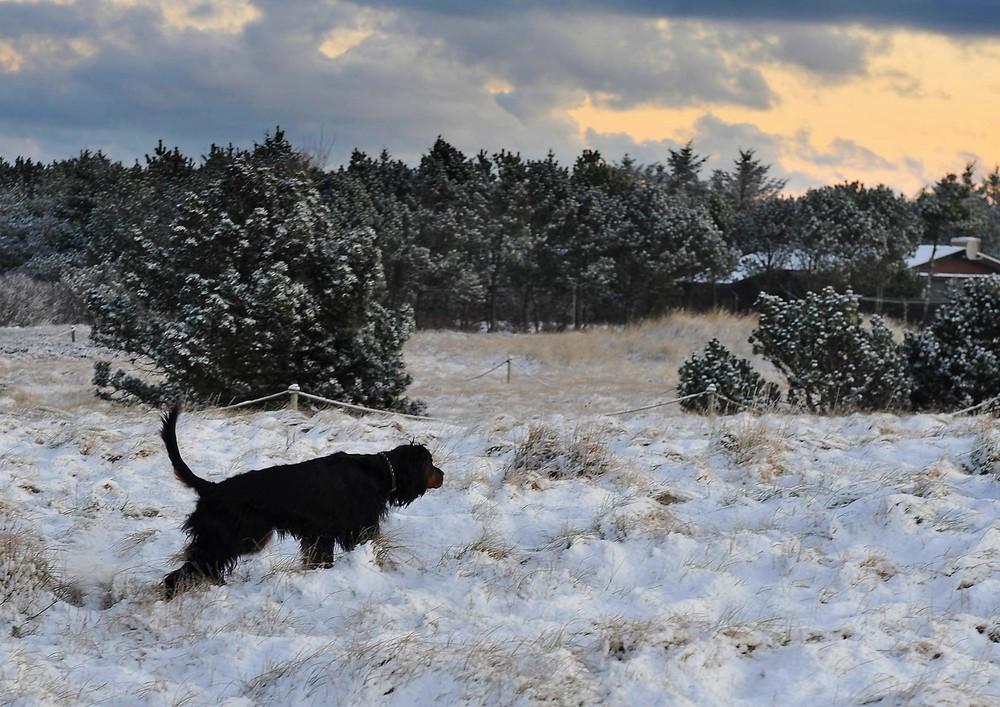Schnee - Hund