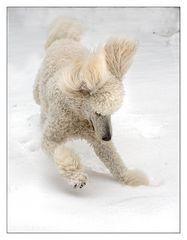 Schnee-Hund_2
