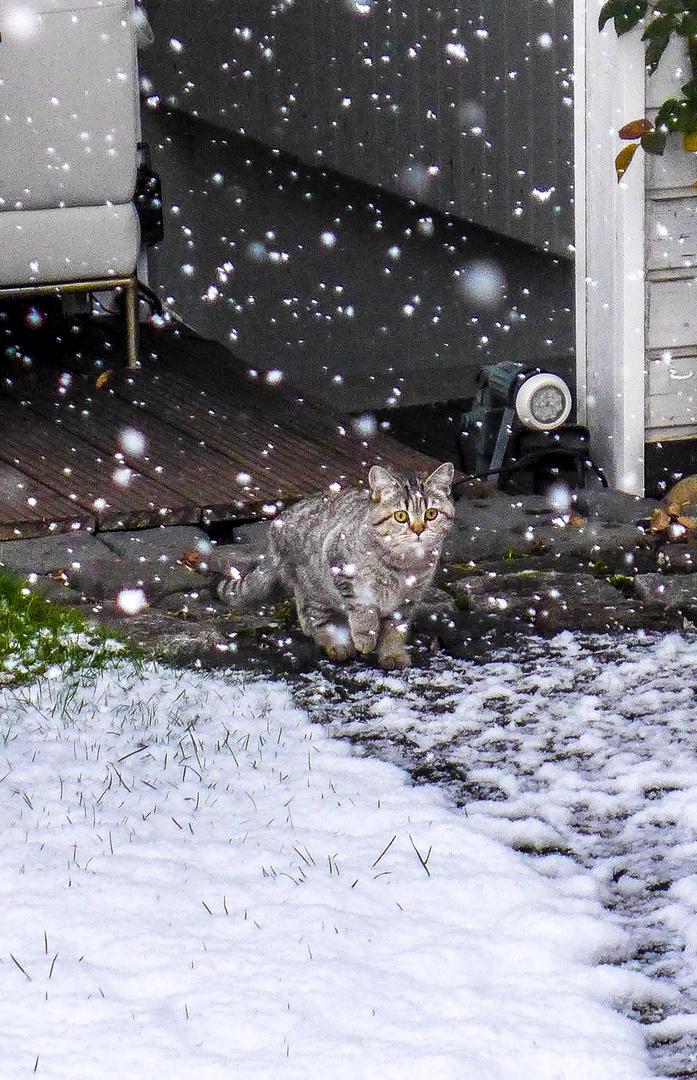 Schnee - ich komme!