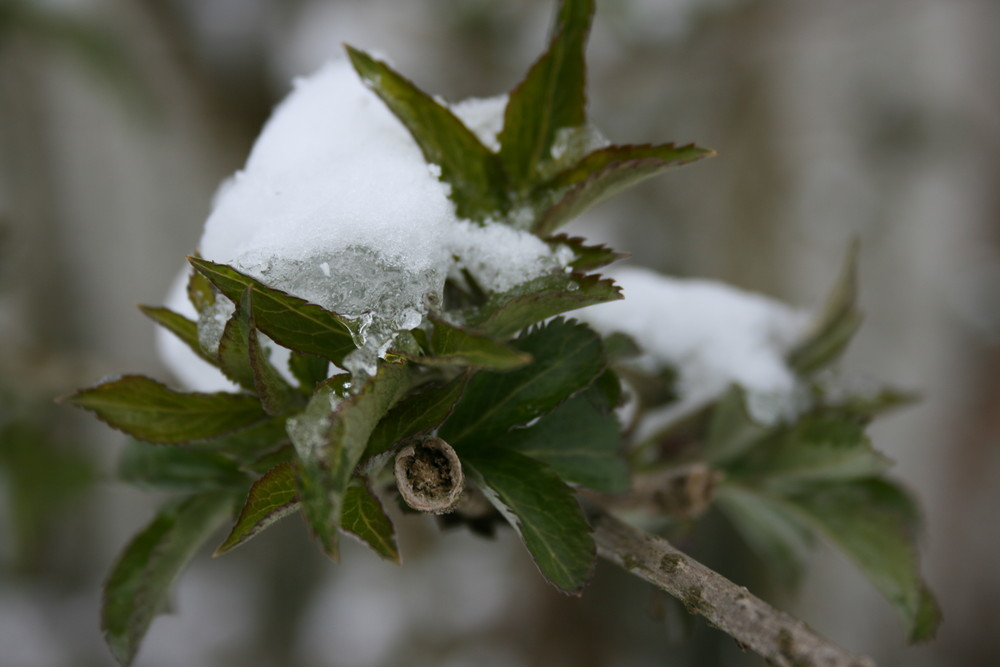 schnee im blatt