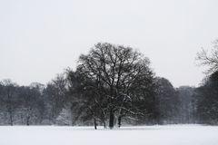 Schnee im Bremer Bürgerpark