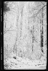 Schnee im Buchenwald ...