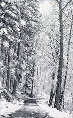 Schnee im Buchenwald ... II