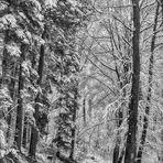 Schnee im Buchenwald III