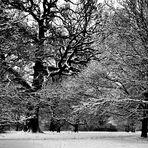 Schnee im Hain