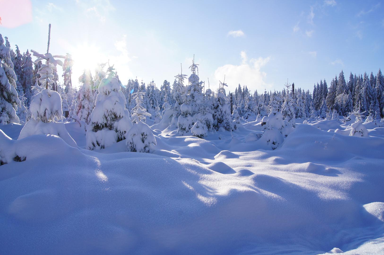 Schnee Kaltenbronn