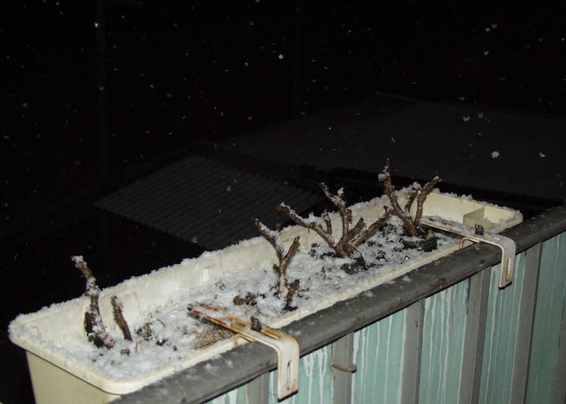 Schnee im Kasten..
