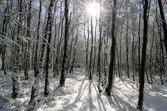 ~ Schnee im März ~