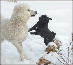 Schnee im Tanz