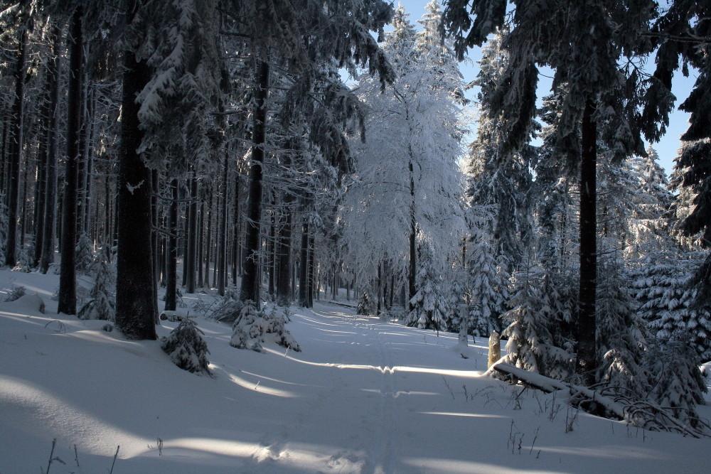 Schnee im Taunus bei Frankfurt am Main
