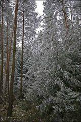 Schnee im tiefsten Wald