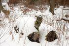 Schnee im Wald 1