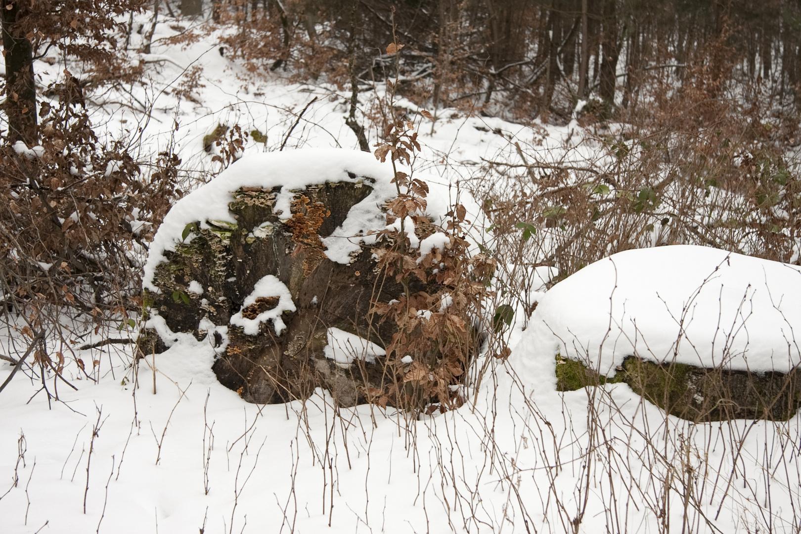 Schnee im Wald 2