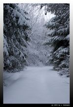 Schnee im Wald