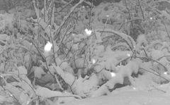 Schnee in den Pyrenäen, 29.Januar.2003