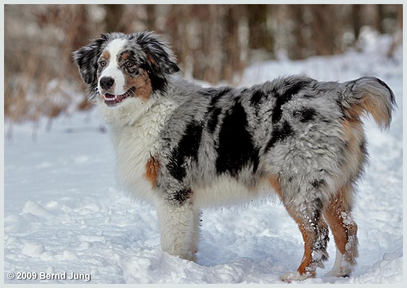 Schnee ist Hundewetter...