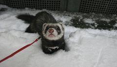 Schnee ist toll!