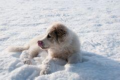 Schnee.... lecker!