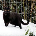 Schnee mag er nicht so sehr