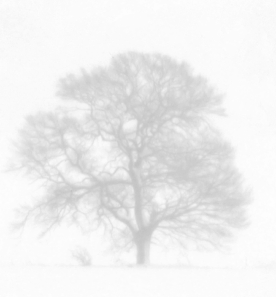 Schnee-Nebel-Baum