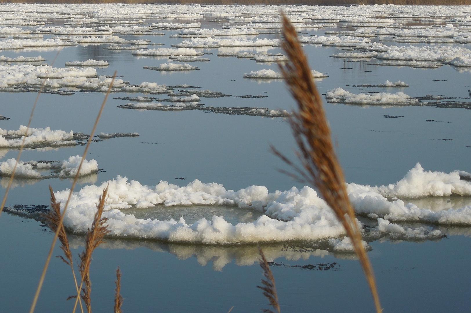 Schnee-Nester auf der Oder bei Groß Neuendorf