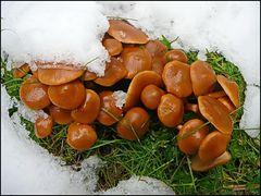 Schnee-Pilze...
