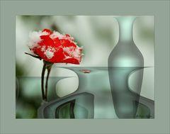 Schnee. Rose. Vasen.