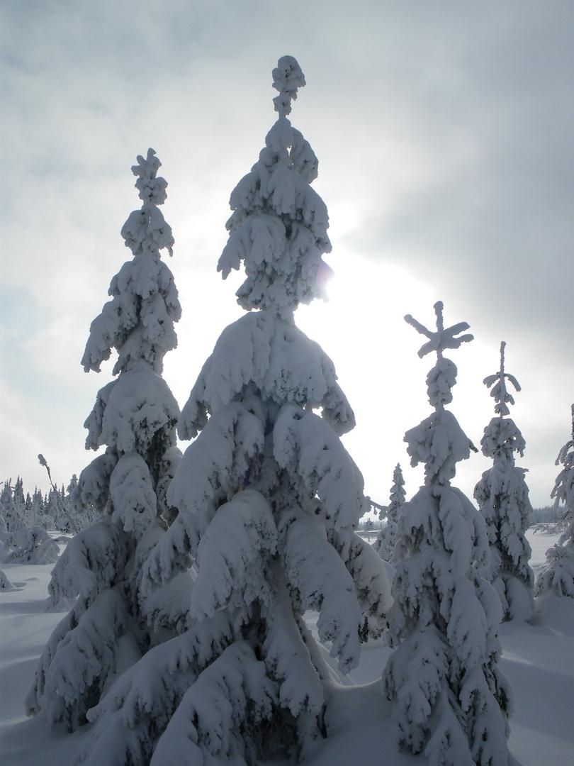 Schnee... Schnee... Schnee...