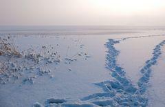 Schnee-Spuren