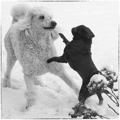 Schnee-Tanz - blach&white