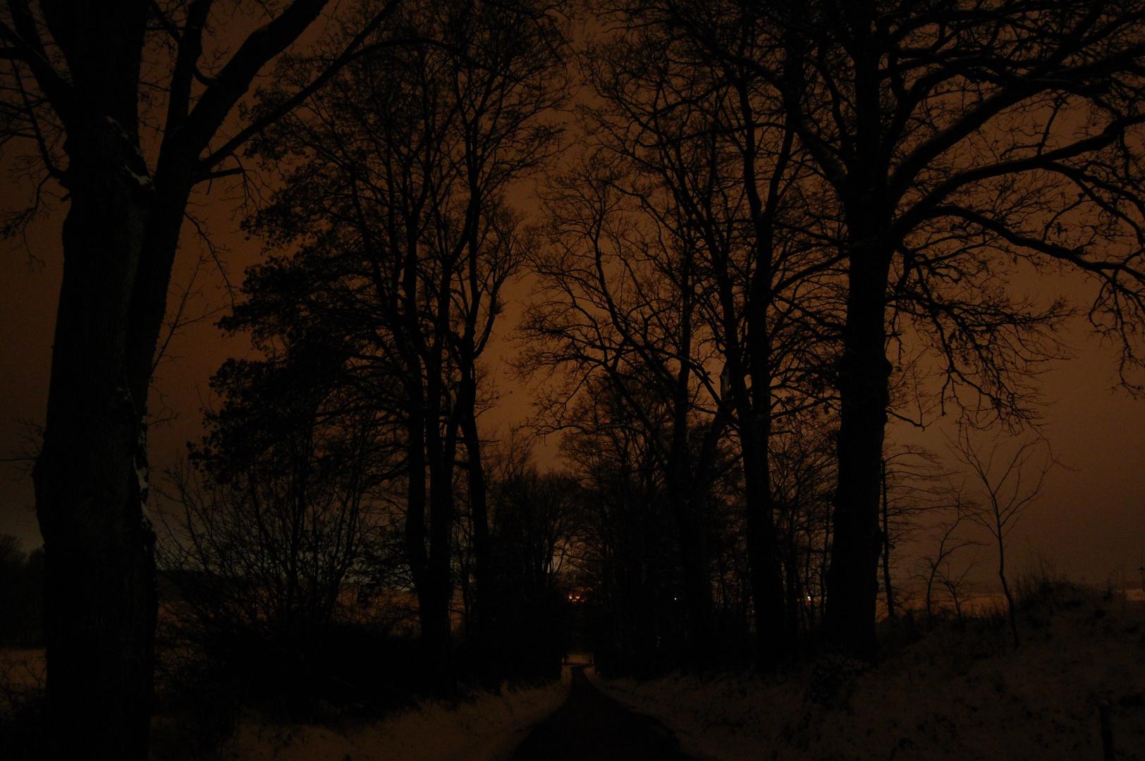 Schnee und kahle Bäume