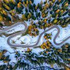 Schnee und Lärchen
