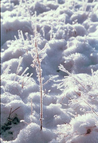 Schnee und Reif.