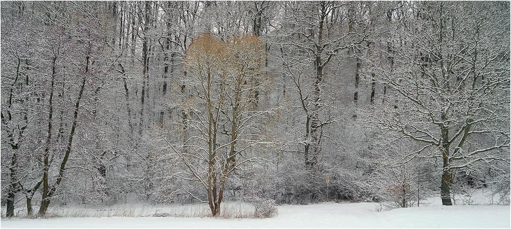 """Schnee """"von gestern"""""""