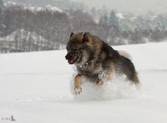 Schneebär in Action