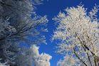 Schneebäume