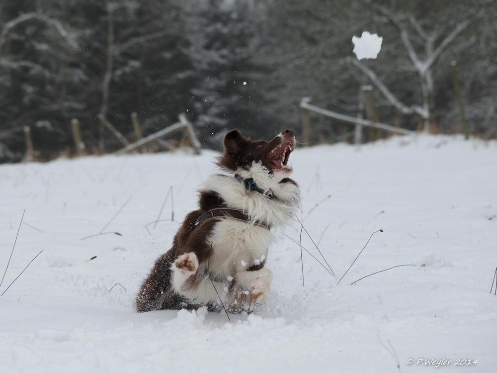 Schneeball fangen... :)