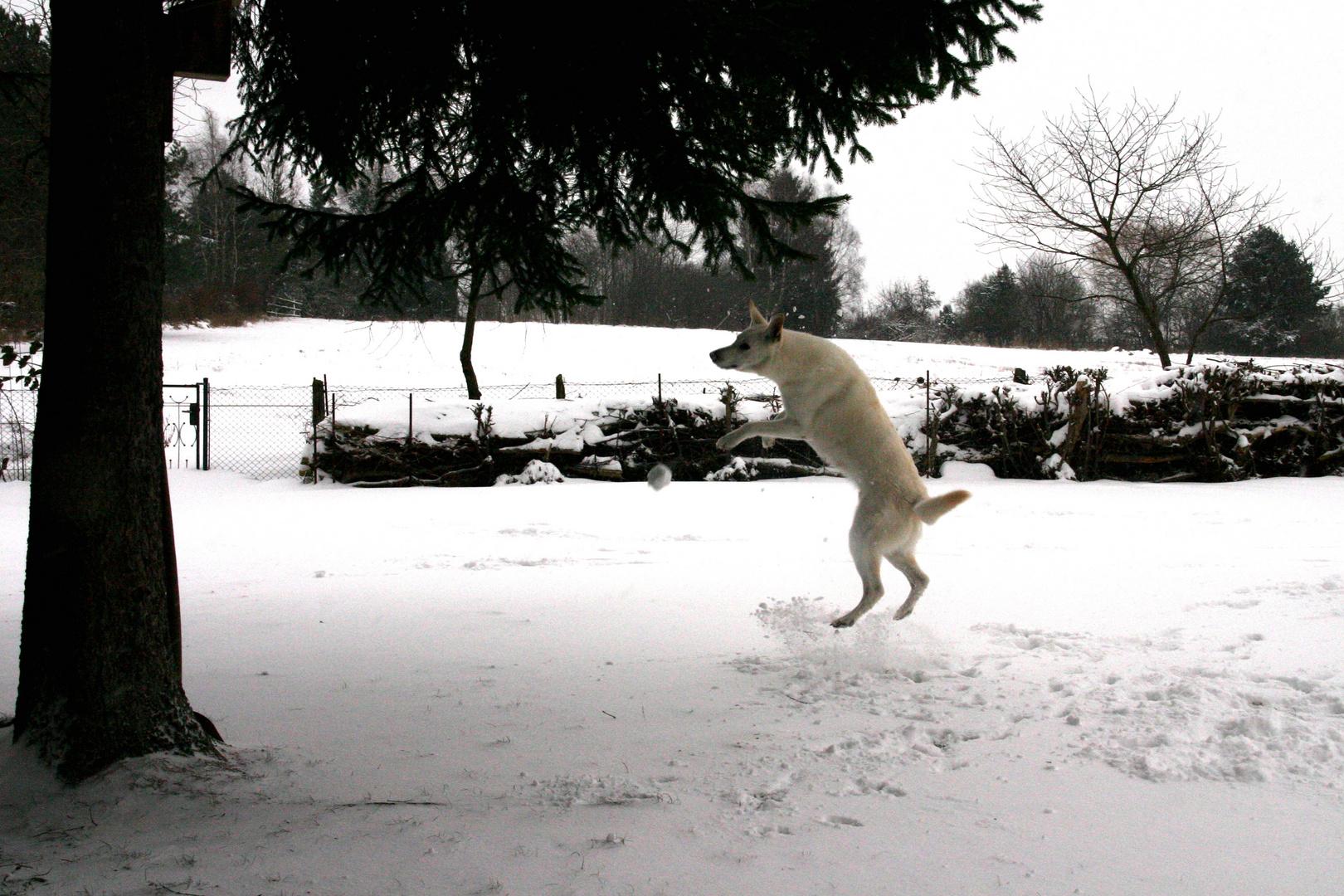 Schneeball fangen...