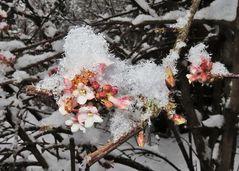 """""""Schneeball"""" mit Schnee"""