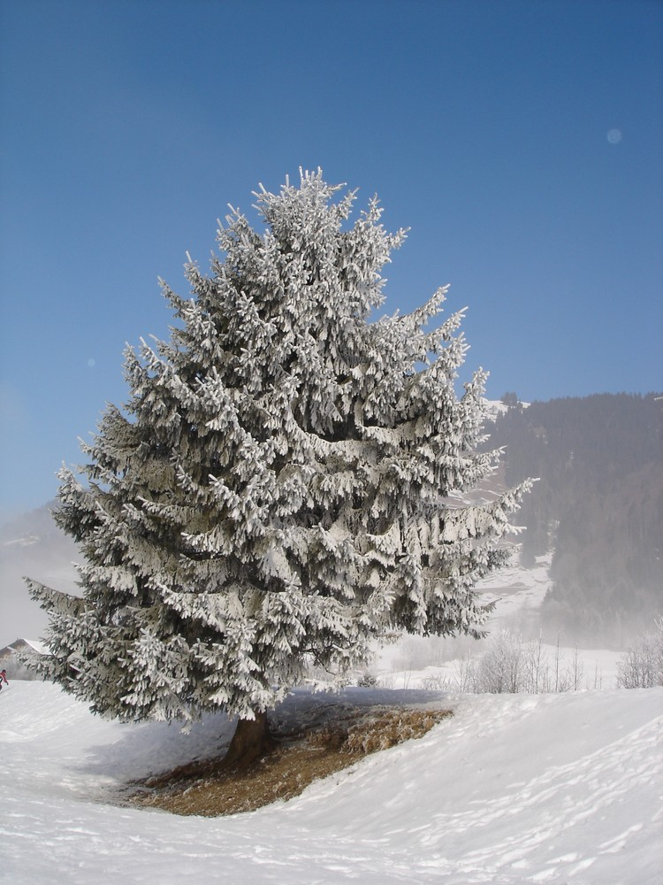 Schneebaum